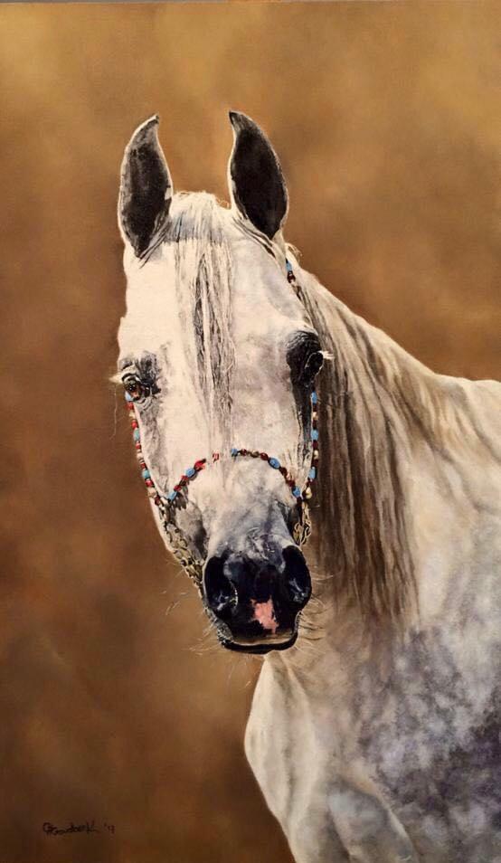 'Arabian horse portrait'
