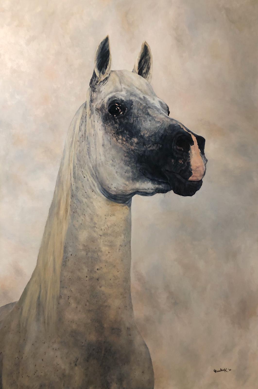 Portrait of a pure-bred Bahraini Arabian Stud Stallion 'Obeyaan Barakat'