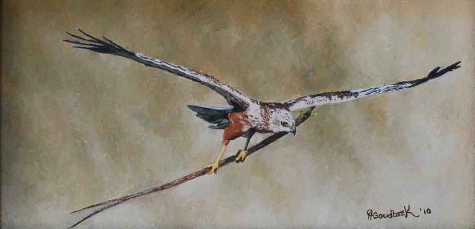 'Marsh Harrier'